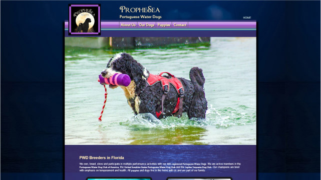 Portuguese Water Dog Web Project